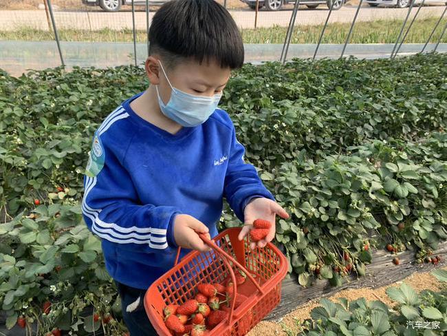 关于龙泉的大棚摘奶油草莓的作文_梦见摘着吃草莓,有土_摘草莓+作文
