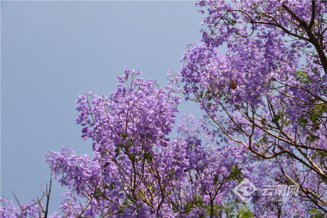 花开花落时作文_棕榈树开花时图片_蟹爪兰开花时晒太阳吗