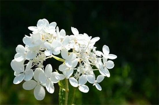 花开花落花无言_仙客来花如何让仙客来多开花_花开花落的瞬间作文