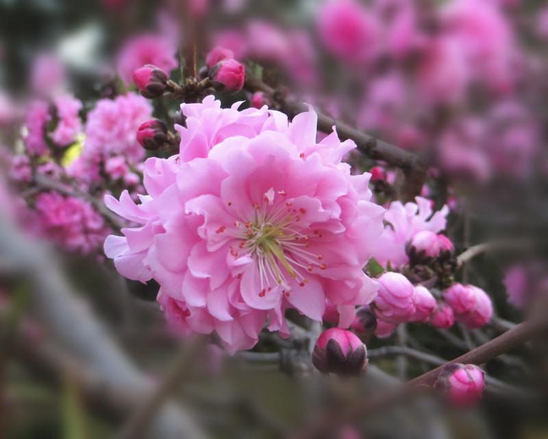 花开花落的瞬间作文_日轮花什么时候开花_仙客来花如何让仙客来多开花