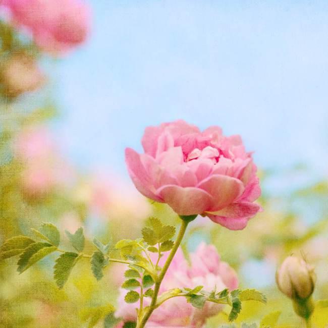 人生花开花落作文_如意黄后花开花照片_为什么仙丹花不开花
