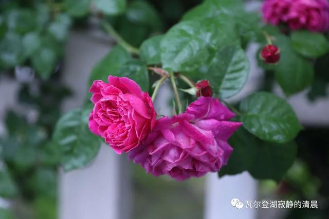 天堂鸟花什么时候开花_龙吐珠花冬天是否开花_人生花开花落作文