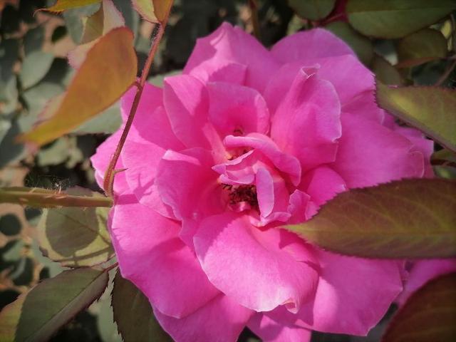 人生花开花落作文_龙吐珠花冬天是否开花_天堂鸟花什么时候开花